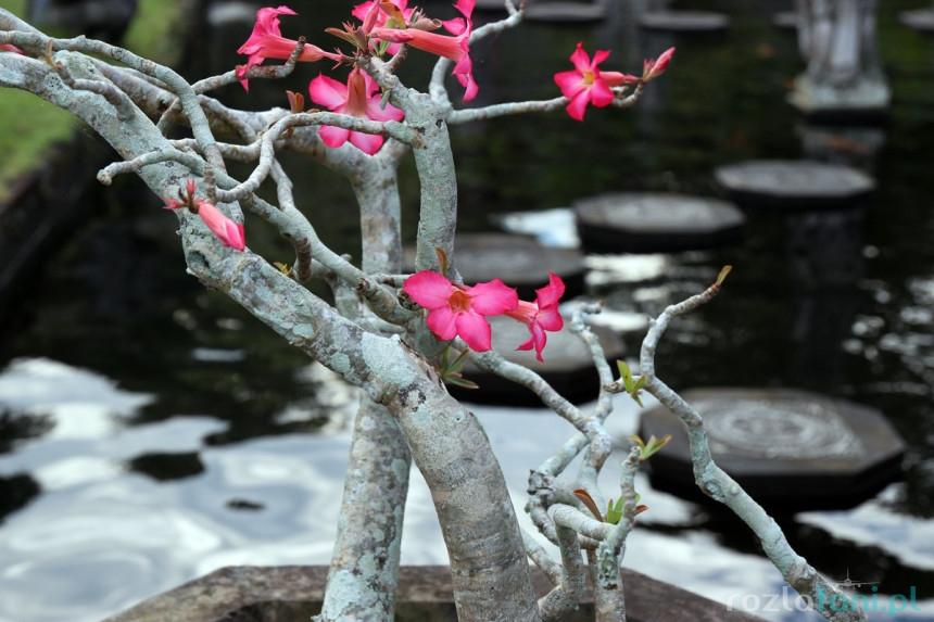 Roślinność Tirtagangga