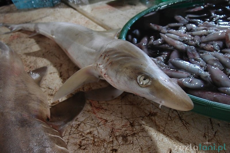 Rekiny na targu rybnym w Jimbaran